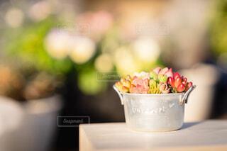 多肉植物の写真・画像素材[4051942]