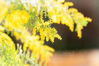 花のクローズアップの写真・画像素材[4179917]