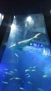 サメの写真・画像素材[4041994]