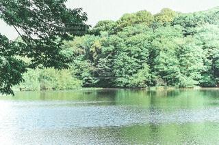 湖畔に映る森の写真・画像素材[4396214]