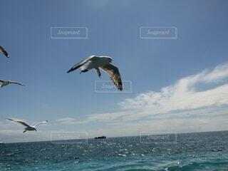 海と鳥の写真・画像素材[4045887]
