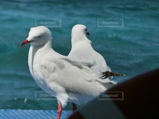 水の中に立つ鳥の写真・画像素材[4045895]