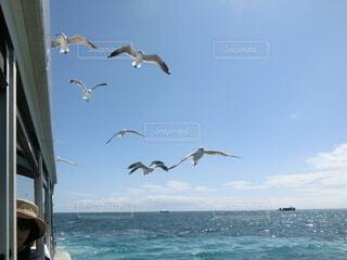 水の体の上を飛ぶカモメの群れの写真・画像素材[4045894]