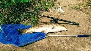 草の中に横たわる魚の写真・画像素材[4056424]