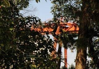 木の隣にあるヤシの木の群の写真・画像素材[4180407]
