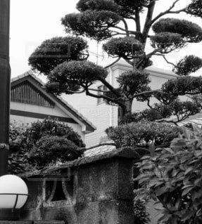 建物の側にあるヤシの木の群れの写真・画像素材[4334458]