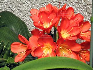 植物の花瓶の写真・画像素材[4372992]