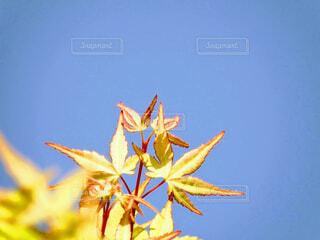 花のクローズアップの写真・画像素材[4372995]