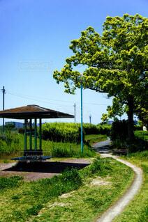 公園の中の小道の写真・画像素材[4381544]