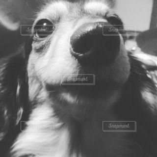 モノクロの写真・画像素材[1175577]