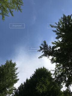 平和な公園から見た空は綺麗だ!の写真・画像素材[4695580]