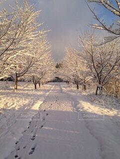 雪に覆われた道路の写真・画像素材[4049512]