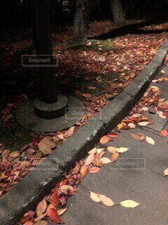 秋の写真・画像素材[4049854]