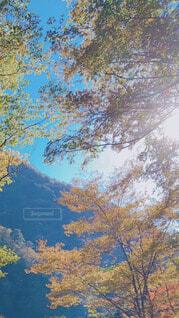 秋の訪れの写真・画像素材[4051019]