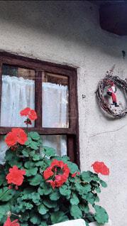 花の写真・画像素材[4051077]
