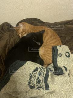 ベッドに横たわる猫の写真・画像素材[4057106]