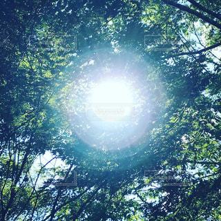 森のビューの写真・画像素材[955724]