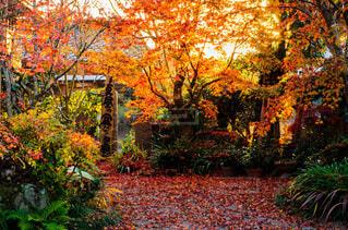 庭の紅葉の写真・画像素材[4088227]