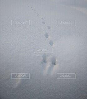 雪の中、誰の足跡?の写真・画像素材[4052310]