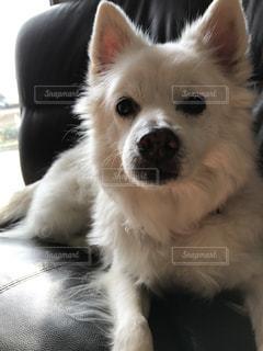 犬の写真・画像素材[604400]