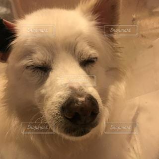犬の写真・画像素材[604412]