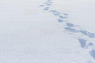 雪に覆われた道の写真・画像素材[4063318]