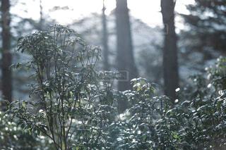 春の光の写真・画像素材[4313233]
