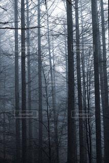 霧の中の森の写真・画像素材[4319858]