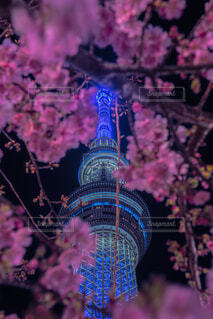 東京スカイツリーと桜のコラボ🌸の写真・画像素材[4389893]