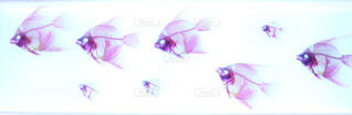 魚の骨の写真・画像素材[1321221]