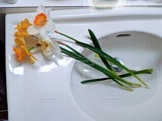 花瓶に指す前の切り花の写真・画像素材[4257056]