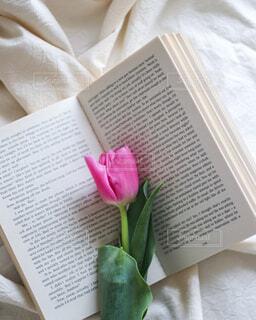 本とチューリップの写真・画像素材[4313959]