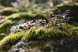 水辺の植生の写真・画像素材[4066768]