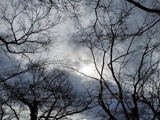 魔女の森の写真・画像素材[4069660]