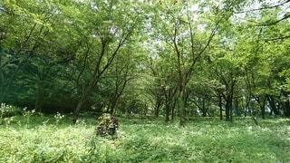 森の広場の写真・画像素材[4073222]