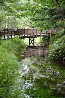 森の中を流れる清流に架けられた遊歩道の写真・画像素材[4125432]