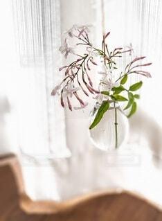 窓辺で愛らしく咲くジャスミンの写真・画像素材[4356325]