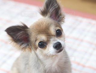 犬の写真・画像素材[171208]
