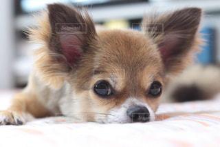 犬の写真・画像素材[171209]