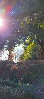 太陽と森のコントラストの写真・画像素材[4069848]