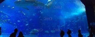 水の下で泳ぐ魚の写真・画像素材[4070350]