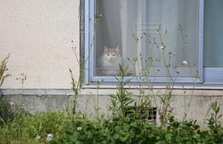 猫の写真・画像素材[173199]