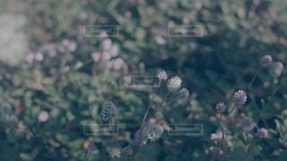 花の写真・画像素材[173577]