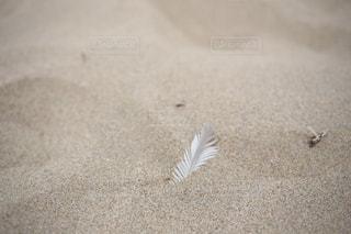 自然,風景,アウトドア,海,夏,鳥,砂,白,砂浜,羽,羽根,切ない