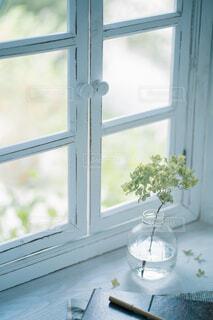 窓際のアナベルの写真・画像素材[4161571]
