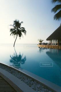 モルディブの海とプールとヤシの木の写真・画像素材[4277278]