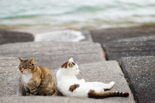 浜辺に座っている猫の写真・画像素材[4277327]