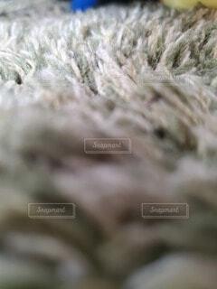 小人目線の写真・画像素材[4254707]