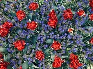 カラフルな花の写真・画像素材[4072451]