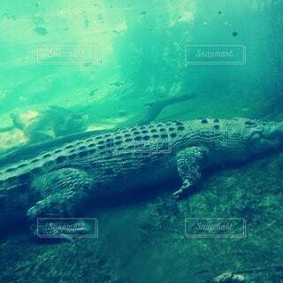 爬虫類の王の写真・画像素材[4073179]